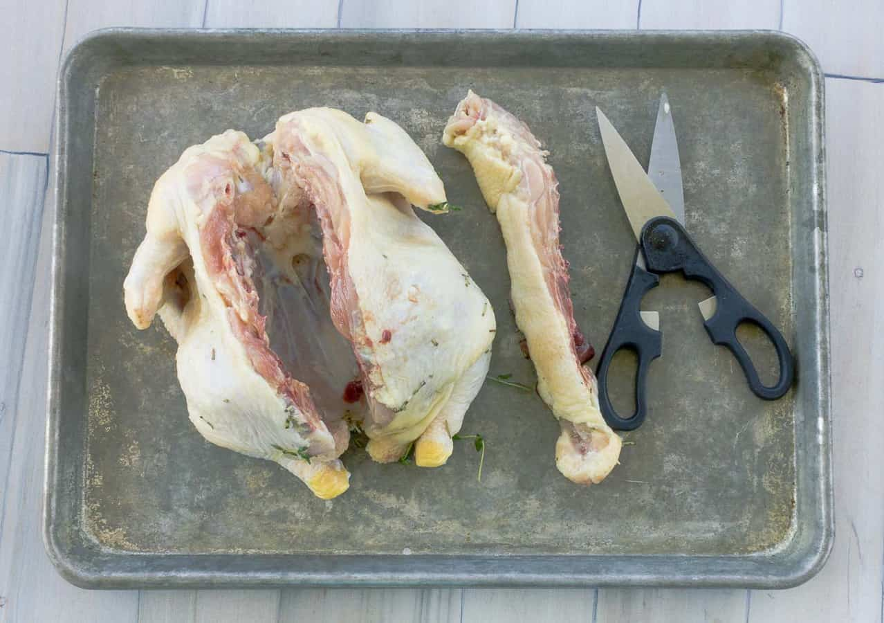 chicken on baking sheet with scissors and backbone removed